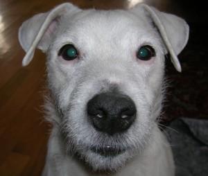 Animal, Veterinary, Hospital, Clinic, Salty Paws, Yorktown, Newport News, Hampton Roads, Poquoson, Salty Paws